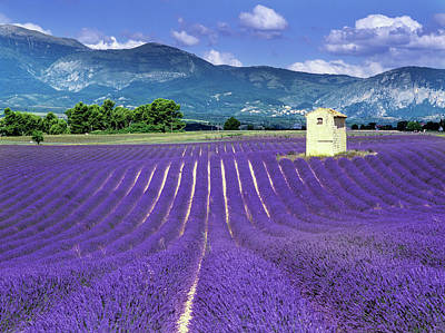 Photograph - Purple Fields In France With Mountains by Kodachrome25