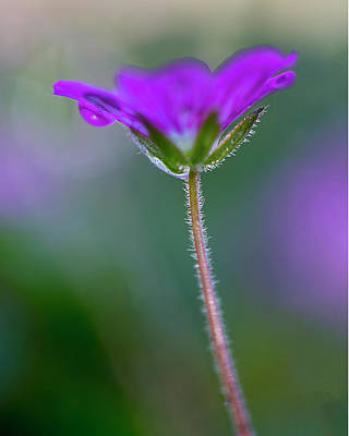 Photograph - Purple Flower by John Rodrigues