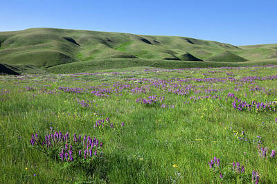Photograph - Purple Flowers In Bloom by Todd Klassy