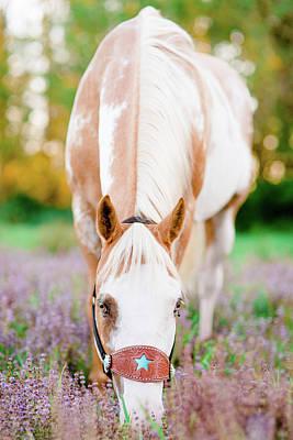 Photograph - Purple Flowers by Kirstie Marie Jones