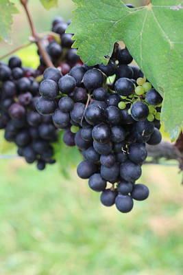 Staff Picks Cortney Herron - Purple Grape Bunches 20 by Cathy Lindsey