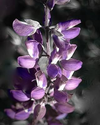 Photograph - Purple Haze by Lynda Anne Williams