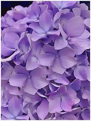 Cindy Digital Art - Purple Hydrangea  by Cindy Greenstein