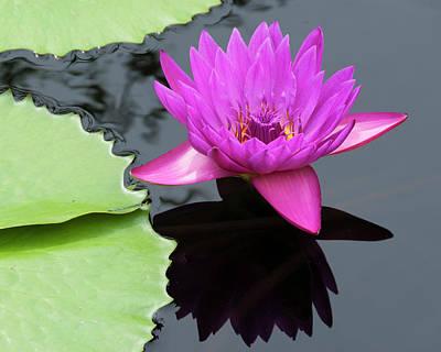 Photograph - Purple Majesty by Paul Croll