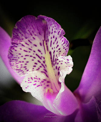 Digital Art - Purple Orchid 2 by Silvia Marcoschamer