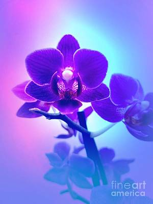 Mixed Media - Purple Orchid  by Rachel Hannah