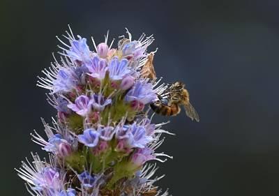 Photograph - Purple Passion 2 by Fraida Gutovich