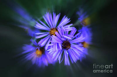 Photograph - Purple Passion by Elaine Manley
