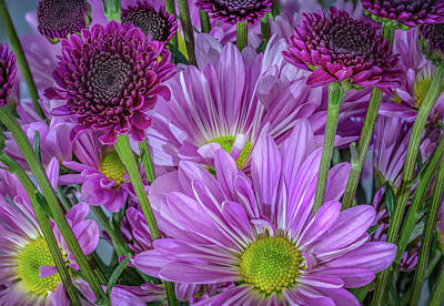 Photograph - Purple Power Chrysanthemum by Keith Smith