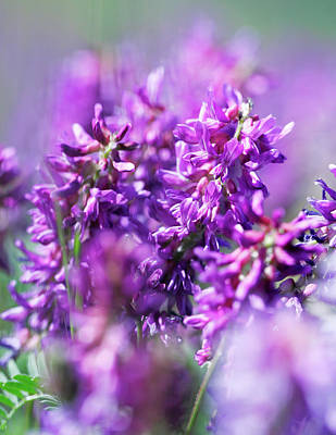 Photograph - Purple Power by Todd Klassy