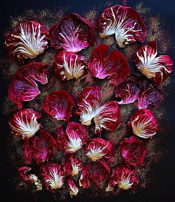 Photograph - Purple Radicchio by Sarah Phillips
