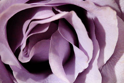 Photograph - Purple Rose Abstract 2 by Angela Murdock