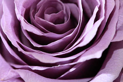 Photograph - Purple Rose Abstract by Angela Murdock