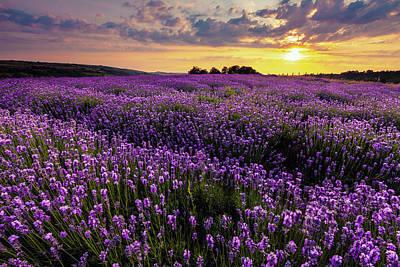 Photograph - Purple Sea by Evgeni Dinev