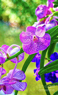 Digital Art - Purple Thai Orchid by Ian Gledhill