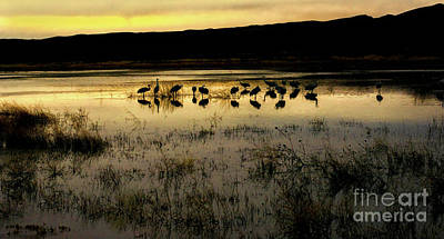 Photograph - Quiet Reflection by Susan Warren