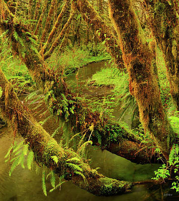 Photograph - Quinault Rain Forest by Leland D Howard