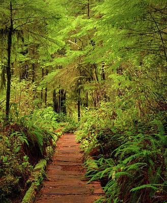 Photograph - Quinualt Rain Forest Path by Leland D Howard