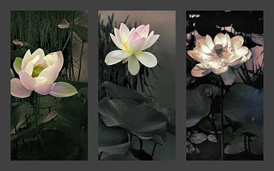 Photograph - Lotus Collection Triptych by Jessica Jenney