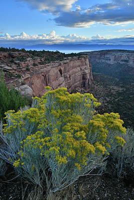 Photograph - Rabbitbush Along Rim Rock Drive In Colorado Nm by Ray Mathis