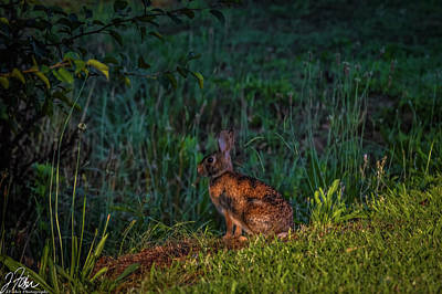 Wall Art - Photograph - Rabit Hiding In Plain Sight by James Fisher