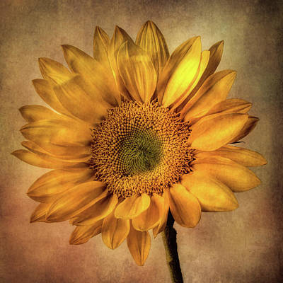 Photograph - Radiant Sunflower by Garry Gay