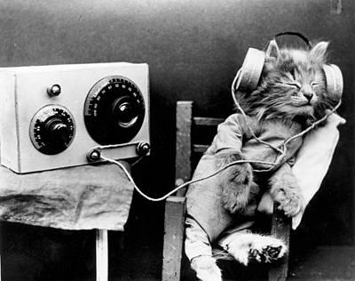 Photograph - Radio Cat by Monty Fresco