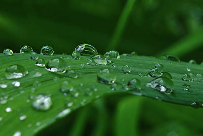 Photograph - Rain Drops by Brad Chambers