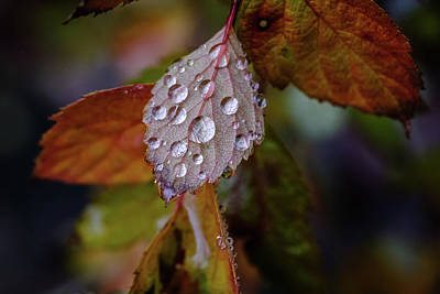 Photograph - Rain On December Leaves by Glenn DiPaola