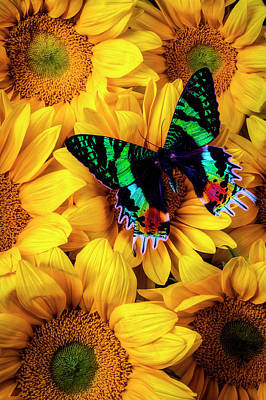 Photograph - Rainbow Butterfly by Garry Gay