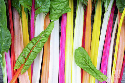 Photograph - Rainbow Chard  by Tim Gainey
