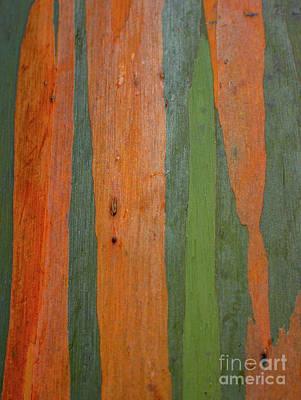 Photograph - Rainbow Eucalyptus Bark by Charmian Vistaunet