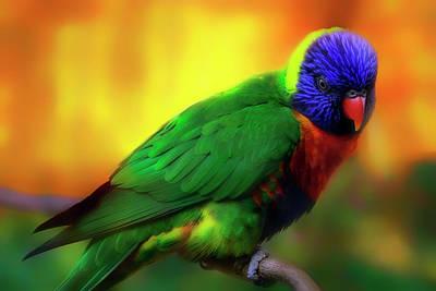 Photograph - Rainbow Lorikeet Sunset - Australia - Parrot by Jason Politte