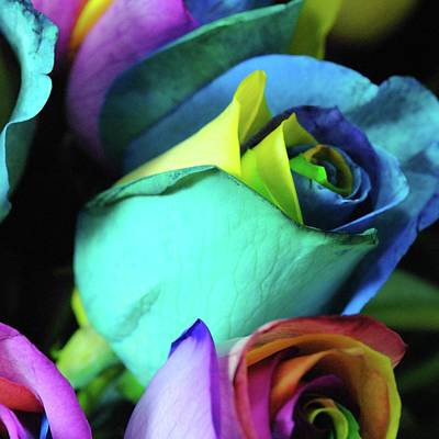 Pop Art Rights Managed Images - Rainbow Roses 10 Royalty-Free Image by Cindy Boyd
