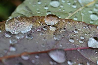 Juan Bosco Forest Animals Royalty Free Images - Raindrops Royalty-Free Image by Iris Russak