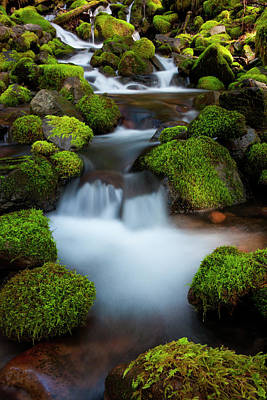 Photograph - Rainforest Stream, Olympic National by Mint Images/ Art Wolfe