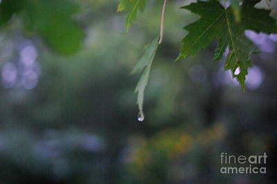 Frank J Casella Royalty-Free and Rights-Managed Images - Raining by Frank J Casella