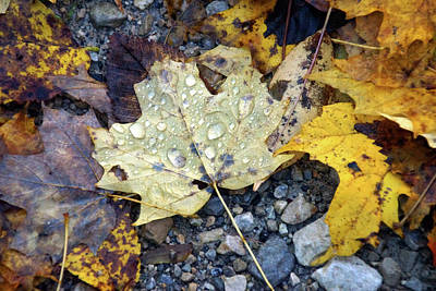 Photograph - Rainy Autumn Day by Mike Murdock