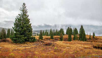 Rainy Day At Molas Pass Art Print
