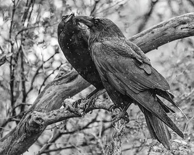 Photograph - Rainy Ravens by Mary Hone