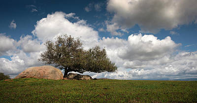 Photograph - Ramona Grasslands Tree And Clouds by William Dunigan