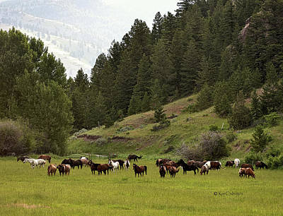 Photograph - Ranch Horses At Pasture by Kae Cheatham