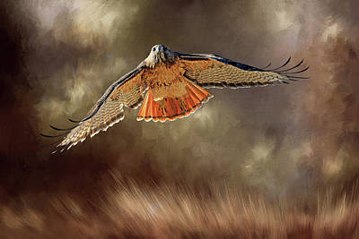 Red Tail Hawk Wall Art - Photograph - Raptor by Donna Kennedy
