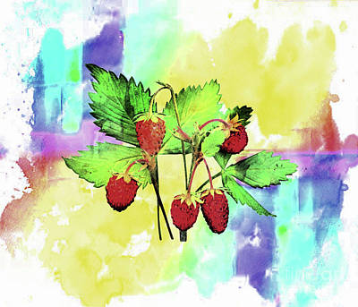 Digital Art - Raspberries ..watercolour   Abstract by Elaine Manley