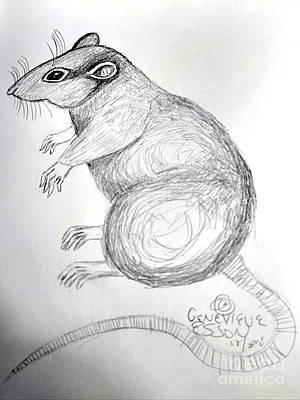 Animals Drawings - Rat by Genevieve Esson