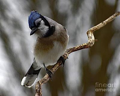 Airplane Paintings - Raucous Blue Jay by Cindy Treger