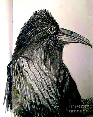 Animals Drawings - Raven by Genevieve Esson