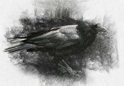 Surrealism Drawings Royalty Free Images - Raven Royalty-Free Image by Zapista OU