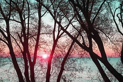 Photograph - Razzle Dazzle Pink And Mint Sunrise Through Willow Lace by Georgia Mizuleva