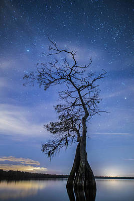 Photograph - Reaching For The Stars by Stefan Mazzola